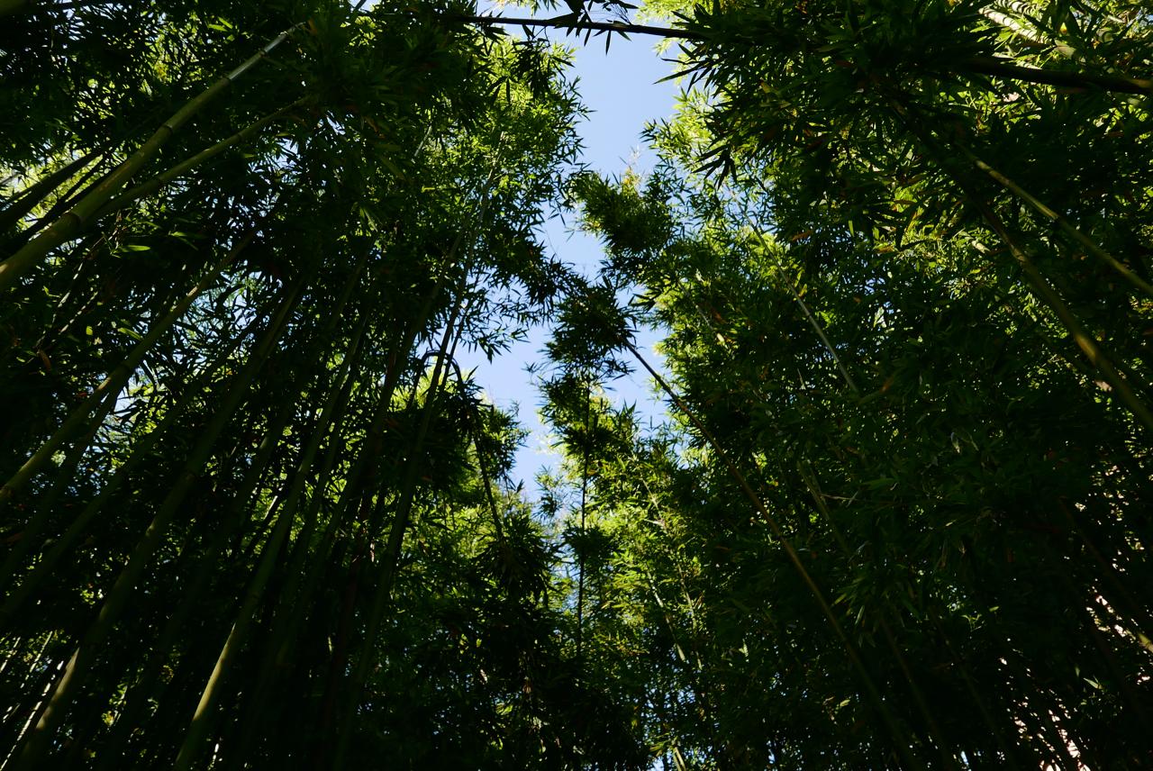 台北咖啡|「CAMA COFFEE ROASTERS豆留森林」陽明山上的日式秘境咖啡廳